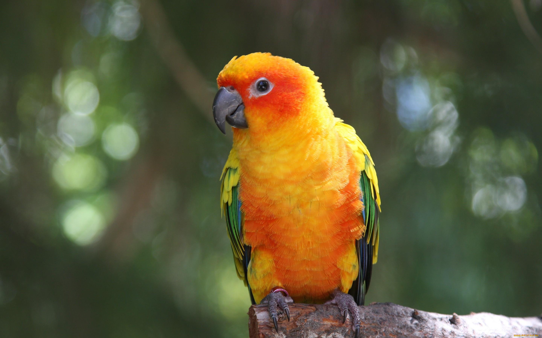 Картинки попугаи лучшие